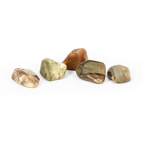 petrified wood pocket gemstone, petrified wood crystal, crystal shop