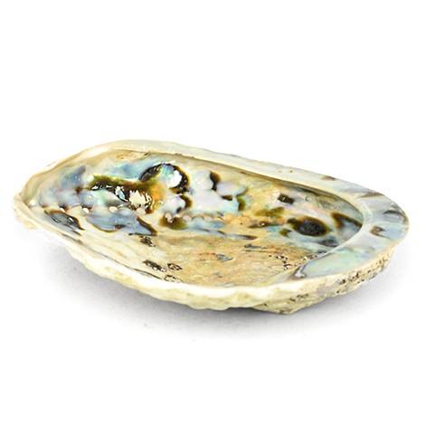polished decorative shellfish, sea ear shellfish